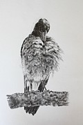 Magpies Drawings Metal Prints - Image is Everything Metal Print by Leonie Bell