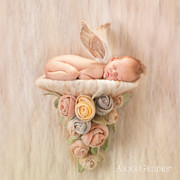 Shelf Photo Prints - Imogen 4 weeks Print by Anne Geddes