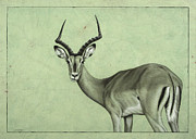 James W Johnson Drawings Prints - Impala Print by James W Johnson