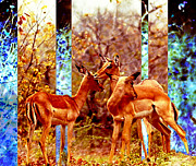 African Pyrography Prints - Impalas Dreaming Print by Hartmut Jager