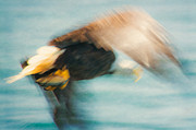 Impressionism Photos - Impression of an eagle in flight by Tracy Munson