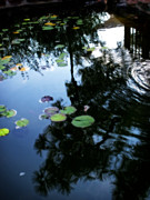Nature Center Pond Prints - In A Dream Print by Mark David Gerson
