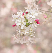 Cherry Blossom Prints - In A Moment Print by Kim Hojnacki