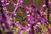 Adam Jewell - In A Sea Of Purple