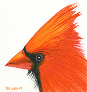 Cardinal Drawings Prints - In All His Glory Print by Nina Kuriloff