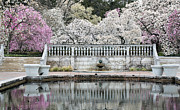 Central Park Photos - In Bloom by JC Findley