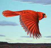 Red Bird Prints - In Flight Print by James W Johnson