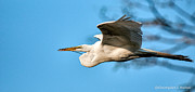 Christopher Holmes Photo Metal Prints - In Flight With Stick Metal Print by Christopher Holmes