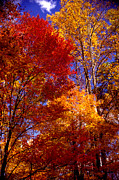 Colors Of Autumn Posters - In Full Color Poster by Paul W Faust -  Impressions of Light