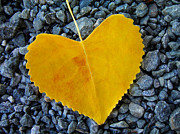 Leaf Prints - In Love ... Print by Juergen Weiss