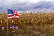 Cornfield Photos - In Memoriam by Sandy Young