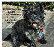 Cairn Terrier Photos - In Memory Of Her by Jay Milo