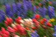 Wildflower Framed Prints - In motion with more emotion Framed Print by Brett Pelletier