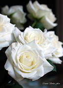 In My Dreams - White Roses Print by Connie Fox