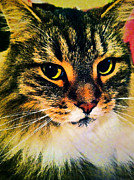 Cat Portraits Prints - In nine lifetimes ... Print by Gwyn Newcombe