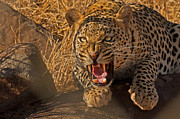 Intensity Prints - In No Uncertain Terms Print by Ashley Vincent