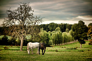 White Horses Framed Prints - In Perche Framed Print by Olivier Le Queinec