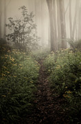 Woodland Photo Posters - In Silence Poster by Amy Weiss