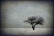 Lone Tree Prints - In The Bleak Of Midwinter Print by Evelina Kremsdorf