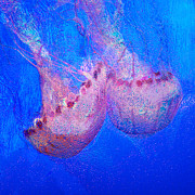 Jellyfish Digital Art Framed Prints - In The Blue Framed Print by Jack Zulli