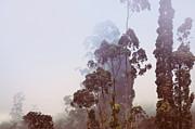 In The Blue Silence. Nuwara Eliya Print by Jenny Rainbow