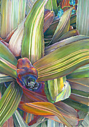 Bromeliad Plant Posters - In the Conservatory # 2 Poster by Nick Payne