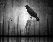 Crow Image Prints - In The Dark Print by Gothicolors And Crows