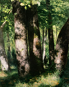 Forest Floor Prints - In the Forest of Fontainebleau Print by Pierre Auguste Renoir