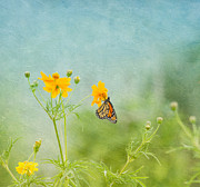 Cheer Metal Prints - In The Garden - Monarch Butterfly Metal Print by Kim Hojnacki