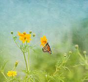 Kim Hojnacki - In The Garden - Monarch Butterfly