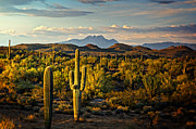 Saguaro Cactus Prints - In the Golden Hour  Print by Saija  Lehtonen