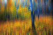 In The Golden Woods. Impressionism Print by Jenny Rainbow