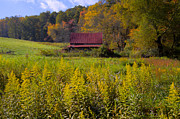 Tennessee Barn Posters - In the Heart of Autumn Poster by Debra and Dave Vanderlaan