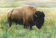 American Bison Pastels Prints - In the Meadow Print by Karen Cade
