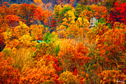 Autumn In The Country Digital Art Posters - In the Midst of Color Poster by Paul Wolf
