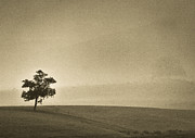 Lone Tree Photo Prints - In the mist lies hope Print by Constance Fein Harding