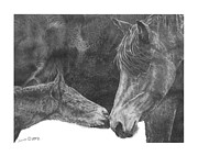 Mare And Foal Pencil Drawing Drawings - in the name of Love by Marianne NANA Betts
