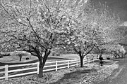 Fences Prints - In The Park Print by Debra and Dave Vanderlaan
