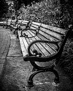 Park Benches Digital Art Posters - In The Park Poster by Perry Webster