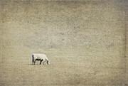 Elena Nosyreva - In the pasture