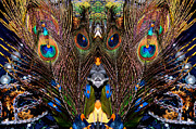Cindy Nunn - In the Peacock Feather Forest