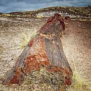 Travel Photographs Framed Prints - In the Petrified Forest Framed Print by Phill  Doherty