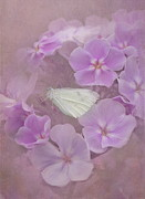 Butterfly On Flower Prints - In The Pink Print by Angie Vogel