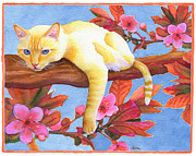 Flame Point Siamese Framed Prints - In the Pink Framed Print by Aura Lesnjak