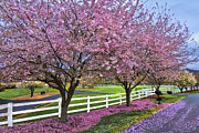 Country Lanes Photo Metal Prints - In The Pink Metal Print by Debra and Dave Vanderlaan