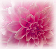 Beautiful Flowers For Mothers Day Digital Art - In The Pink Of My Life by Faye Giblin