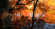 Autumn Art Prints - In the Pond Print by Lourry Legarde