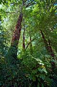Bonnie Bruno - In the Quiet Forest