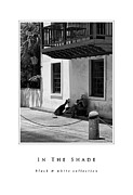 Concrete And Iron Posters - In The Shade black and white collection Poster by Greg Jackson