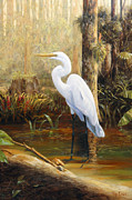 Great Egret Posters - In the Shallows Poster by Tim Davis